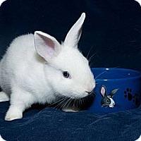 Adopt A Pet :: Bundini - Los Angeles, CA