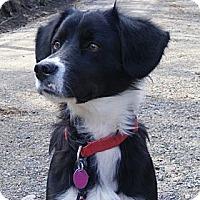 Adopt A Pet :: Zoe - Rigaud, QC