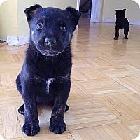 Adopt A Pet :: Luna - Westbank, BC