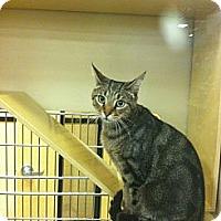 Adopt A Pet :: Stevie - Monroe, GA