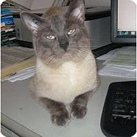 Adopt A Pet :: Bobby Blue - Duncan, BC