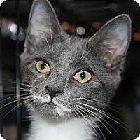 Adopt A Pet :: Roger - Santa Monica, CA