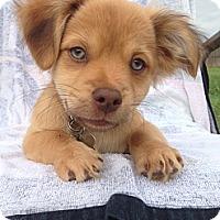 Adopt A Pet :: Zydeco - Vacaville, CA