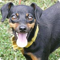 Adopt A Pet :: Mocha - Toledo, OH
