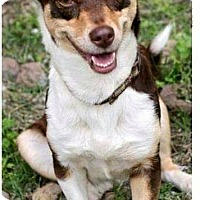Adopt A Pet :: Meredith from the Missions - San Antonio, TX