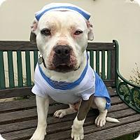 Adopt A Pet :: Bubba Gump - Santa Barbara, CA