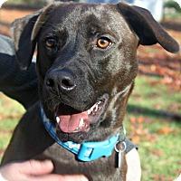 Adopt A Pet :: Atticus - East Rockaway, NY