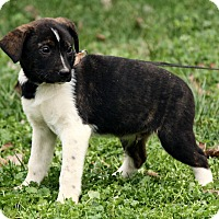 Adopt A Pet :: Xavier - Windham, NH