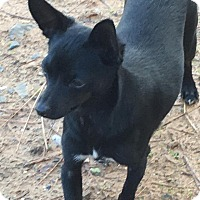 Adopt A Pet :: Bonnie - Lodi, CA