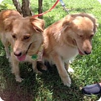 Adopt A Pet :: Mojo and Moxie - New Canaan, CT