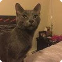 Adopt A Pet :: Logan - New York, NY