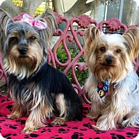 Adopt A Pet :: Puck & Daisy May - Irvine, CA