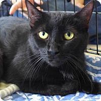 Adopt A Pet :: C-68475 Lizzy - Westampton, NJ