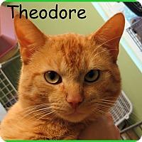 Adopt A Pet :: Theodore - Warren, PA