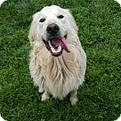 Adopt A Pet :: Byron