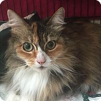 Adopt A Pet :: sally - Kelso/Longview, WA