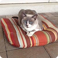 Adopt A Pet :: LOLA - Royal Palm Beach, FL