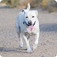 Adopt A Pet :: Buddy - Washoe Valley, NV