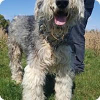 Adopt A Pet :: Simon - Chambersburg, PA