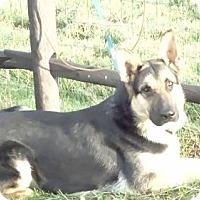 Adopt A Pet :: Barron - Vacaville, CA