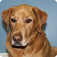 Adopt A Pet :: Buddy - Lisbon, IA