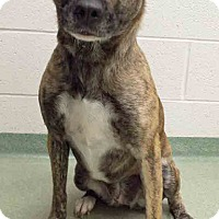 Adopt A Pet :: Sesser - Channahon, IL