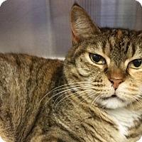 Adopt A Pet :: Gracie - Sarasota, FL