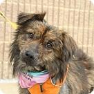 Adopt A Pet :: Reid