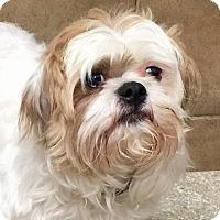 Adopt A Pet :: Chase - Oswego, IL