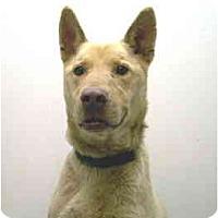 Adopt A Pet :: dice - Port Washington, NY