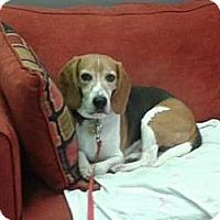 Adopt A Pet :: Underdog - Phoenix, AZ