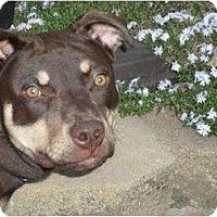 Adopt A Pet :: Reece - Albany, NY