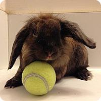 Adopt A Pet :: Bam Bam - Paramount, CA