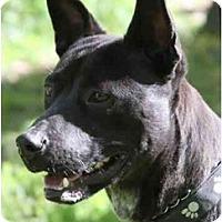 Adopt A Pet :: Sinbad - Chicago, IL