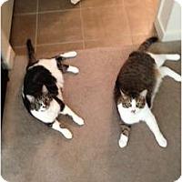 Adopt A Pet :: Carl & Level - Scottsdale, AZ