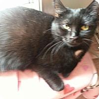 Adopt A Pet :: Belinda