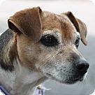 Adopt A Pet :: Gem