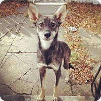 Adopt A Pet :: Brady - Saskatoon, SK