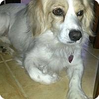 Adopt A Pet :: Charlotte - Scottsdale, AZ