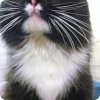 Adopt A Pet :: Scoochy McFluff - Centralia, WA
