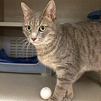 Adopt A Pet :: Misty - Tampa, FL