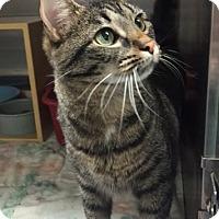 Adopt A Pet :: Willow - Morganton, NC
