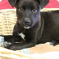 Adopt A Pet :: Seth - Waldorf, MD