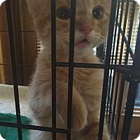 Adopt A Pet :: Lucy - Encinitas, CA