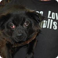Adopt A Pet :: Alpine - Brooklyn, NY