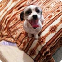 Adopt A Pet :: ATHENS - Chandler, AZ