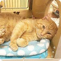 Adopt A Pet :: Franklin - Arlington/Ft Worth, TX