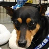 Adopt A Pet :: Rocky - MINNEAPOLIS, KS