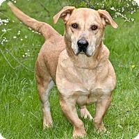 Adopt A Pet :: Nos - Cashiers, NC