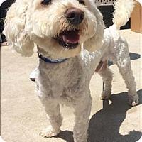 Adopt A Pet :: Casey - Encino, CA